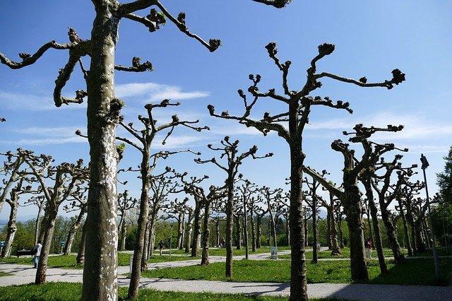 Veranstaltungshinweis Baumschnittkurs
